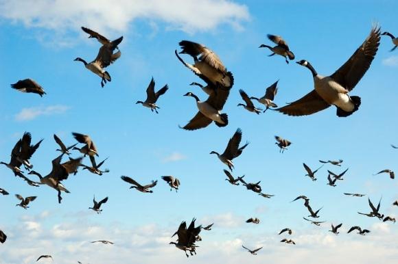 Перелетные птицы вернулись из Крыма в Украину фото, иллюстрация