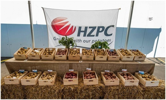 HZPC работает над выведением низкокалорийного картофеля фото, иллюстрация