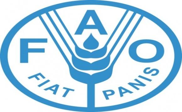FAO підтримала прийняття нового глобального стандарту торгівлі фото, ілюстрація