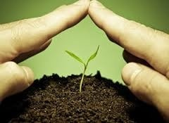 Syngenta може почати в Росії локальне виробництво продуктів для захисту рослин фото, ілюстрація