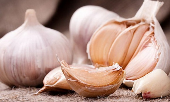 Фермеры, выращивающие чеснок, нашли выгодные «ниши в нише» фото, иллюстрация