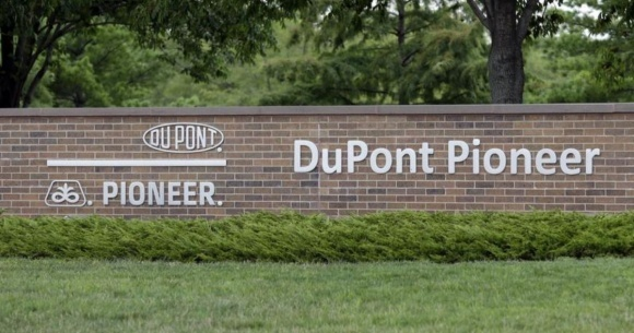 DuPont Pioneer выведет на рынок суперсовременные гибриды кукурузы фото, иллюстрация