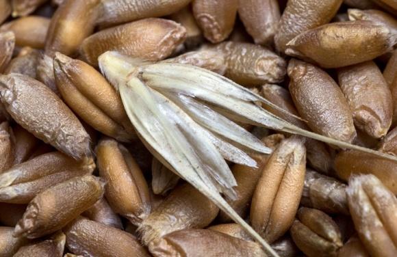 """Україна ризикує втратити можливість експорту зерна до низки країн, - """"УкрАгроКом"""" фото, ілюстрація"""