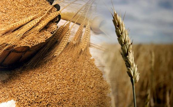 Державна корпорація домовилася про експорт з однією з найбільших компаній агропромислового комплексу Катару фото, ілюстрація