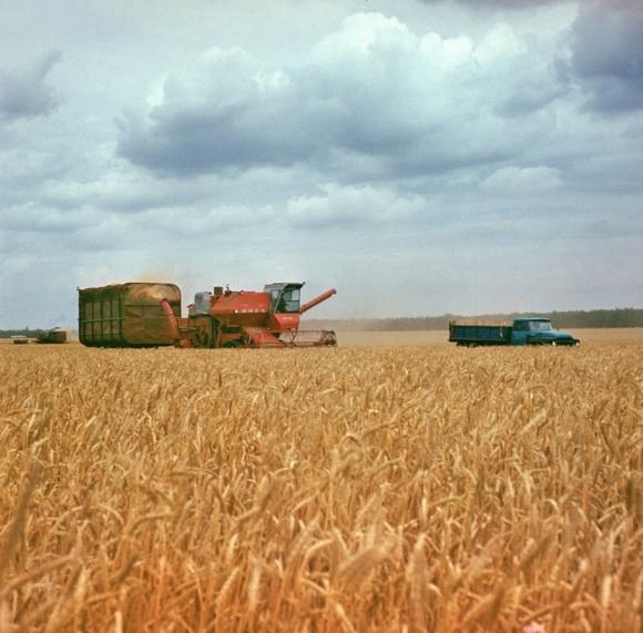 На Півдні України стартували жнива фото, ілюстрація