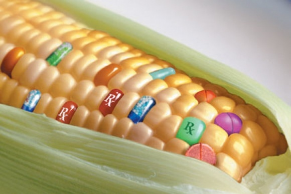 ГМО — научное достижение, в котором мы нуждаемся, — ФАО фото, иллюстрация