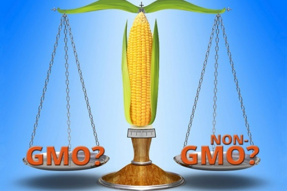 Лише 10% партій української сої та кукурудзи вільні від ГМО фото, ілюстрація