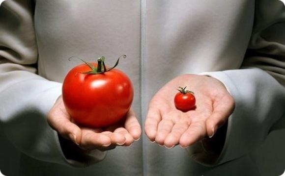 ГМ-овочі визнали безперспективними? фото, ілюстрація