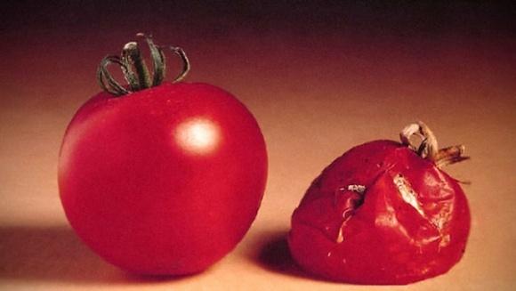 Дослідження виявило резистентність шкідників до ГМО фото, ілюстрація