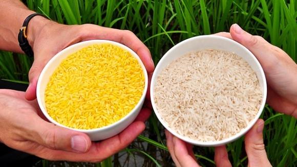 От ГМО есть реальная польза, - эксперт фото, иллюстрация