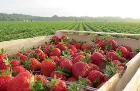 Де зберігатимуть аграрії врожай, якщо в Україні бракує фруктосховищ фото, ілюстрація