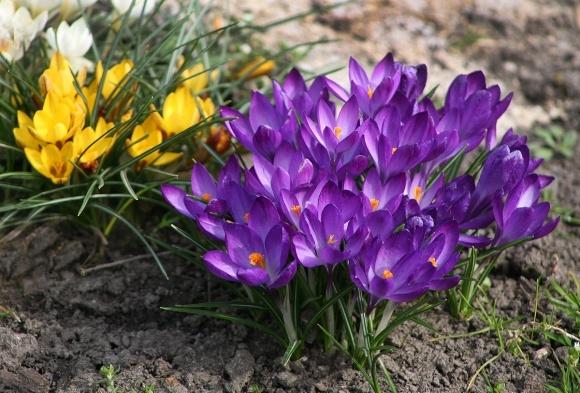 Огородник: мартовские работы в саду и цветнике фото, иллюстрация