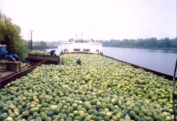 Зернотрейдери і «Укррічфлот» підтримали законопроект «Про внутрішній водний транспорт» №2475а, «Нібулон» утримався фото, ілюстрація