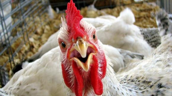 Украина лишилась ключевого потребителя своей курятины фото, иллюстрация
