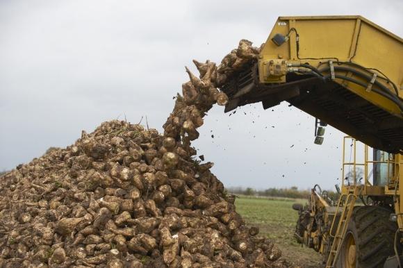"""Производители сахара будут наращивать производственные мощности, - """"Укрцукор"""" фото, иллюстрация"""