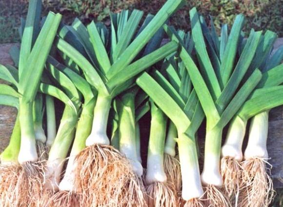 Syngenta продала Hazera один із овочевих насіннєвих напрямків  фото, ілюстрація