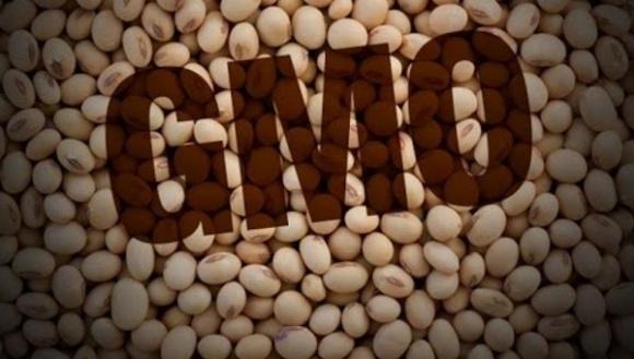 До 70% сои, выращенной в Украине, является ГМ фото, иллюстрация