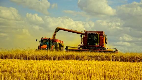 Україна підходить до межі, за якою не впорається зі збором пшениці фото, ілюстрація