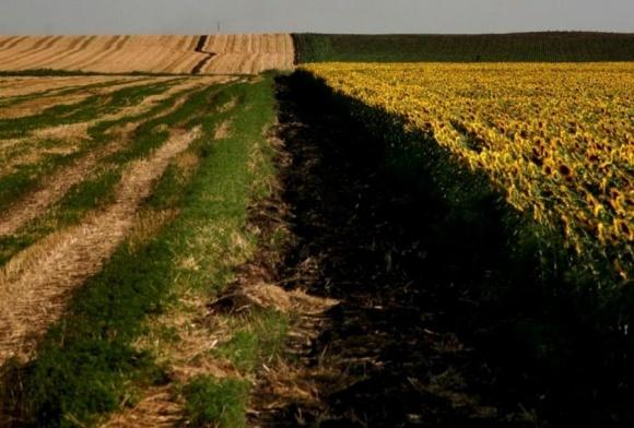Експерти назвали головні проблеми земельної реформи в Україні фото, ілюстрація