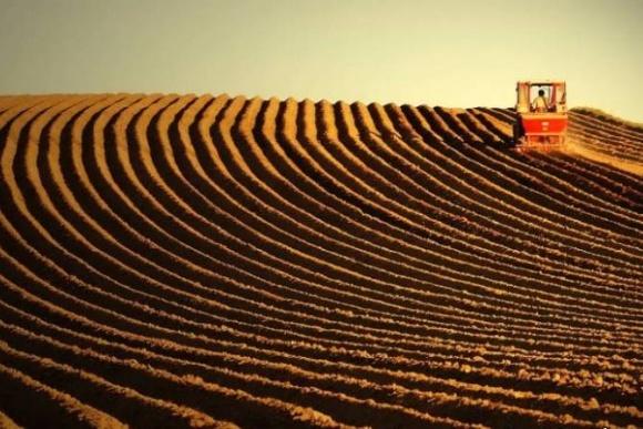 Открытие рынка земли затормозит развитие сельхозпроизводства, - эксперт фото, иллюстрация