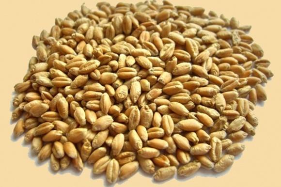 В Украине достоверно не известны объемы производства органического зерна фото, иллюстрация
