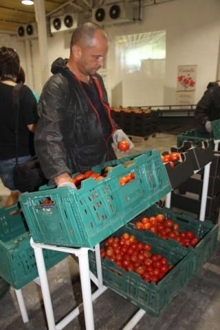 сортировка и калибровка помидоров