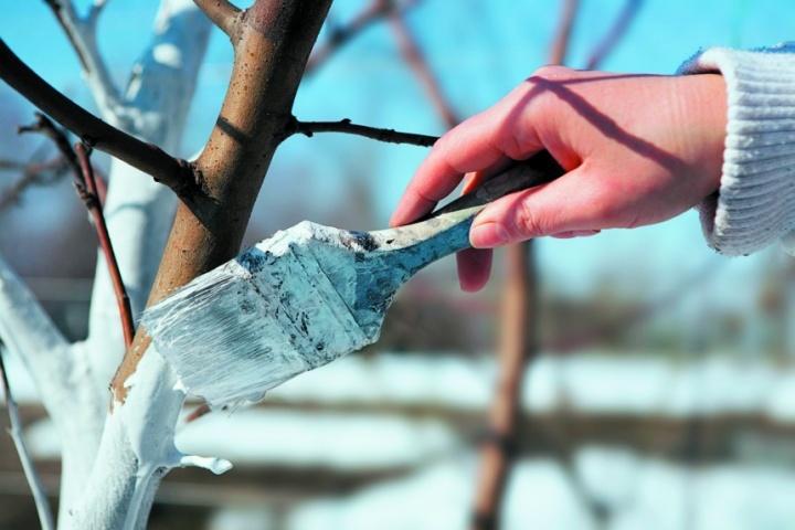 обработка плодовых осенью от паразитов