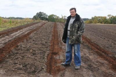 закладка товарної плантації лохини