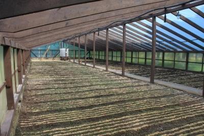 Плівкова теплиця для вирощування сіянців ялинки в Боярськівй ЛДС. На задньому плані - установка для розчинення добрив у поливній воді