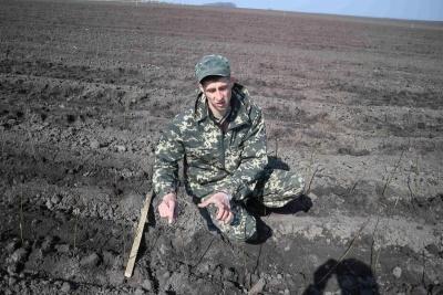 Агроном розсадника Володимир Бурсак на щойно засадженому полі