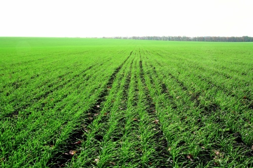 За зменшення показника рН грунту до рівня 5,0 знижується рівень доступності для рослин таких елементів, як-от: азот, фосфор, калій, сірка, кальцій, магній, бор, молібден