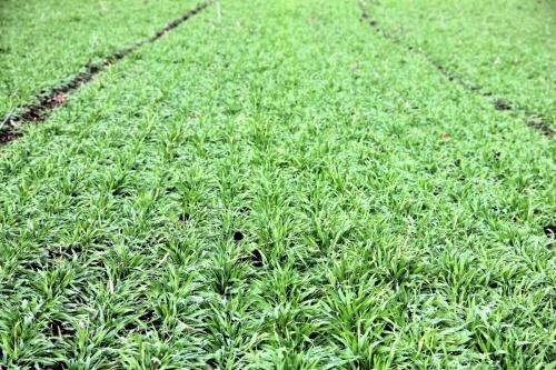Мікроелементи позитивно впливають на здатність рослин протидіяти несприятливим факторам під час їхнього вирощування